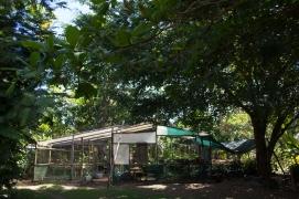 Finca Morpho Nursery